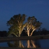 Up lighting trees with flood lights